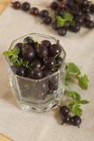 Beeren der schwarzen Johannisbeere Lizenzfreie Stockbilder