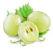 Beeren der weißen Traube mit grünem Blatt Lizenzfreie Stockfotografie