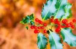 Beeren-E-Mailot Spitzentitel der realistischen Distel der frohen Weihnachten roter Lizenzfreie Stockbilder