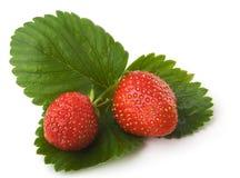 Beeren einer Erdbeere Lizenzfreie Stockfotografie