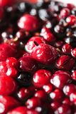 Beeren im Zucker Stockfotografie