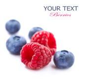 Beeren lokalisiert auf Weiß Lizenzfreie Stockfotografie