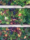 Beeren und Anlagen auf einem Gitter Stockfotos