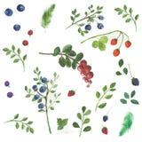Beeren und Blätter auf einem weißen Hintergrund Stockfotografie