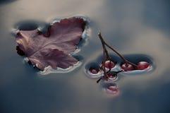 Beeren und Blätter im Wasser Stockfotografie