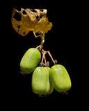 Beeren von Fernem Osten 9 Stockfoto