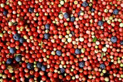 Beerenmoosbeer- und -blaubeerdraufsicht Lizenzfreie Stockfotografie