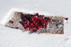Beerenmoosbeerwinter im Schnee stockbild