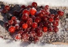 Beerenmoosbeerwinter im Schnee lizenzfreie stockfotos