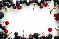 Beerenrahmen der roten und Schwarzen Johannisbeere lizenzfreies stockbild