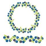 Beerenvektorillustration Blaubeere, Heidelbeerbild lizenzfreie abbildung