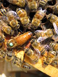 Bees. You can see a group of working bees Royalty Free Stock Photo
