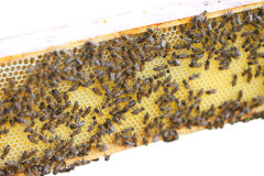 Bees. Stock Images