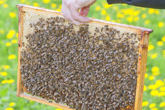 Bees. Stock Photos
