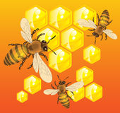 Bees. Do honey in honeycombs inside of beehive vector illustration