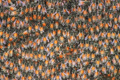 Bees background Stock Images