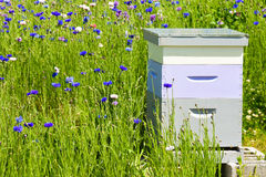 Bees in a Bee Hive Box Royalty Free Stock Image