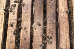 Bees in bee hive frames on a sunny day Royalty Free Stock Images