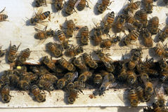 Bees at beehive Royalty Free Stock Images