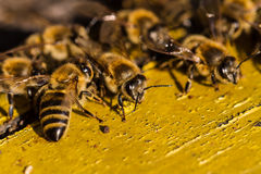 Bees in beehive Royalty Free Stock Images