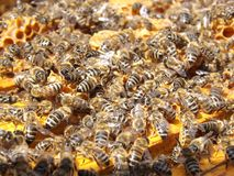 Bees, Beehive, Beekeeping, Honey Royalty Free Stock Photography