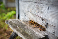Bees and Beehive Royalty Free Stock Photos