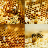 Bees in a beehive on honeycomb Stock Image