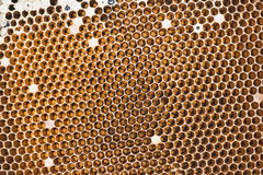 Bees in a beehive on honeycomb Royalty Free Stock Image