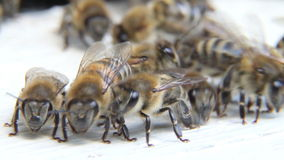 Bees at beehive stock video footage