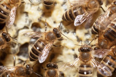 Bees in a beehive Royalty Free Stock Photos