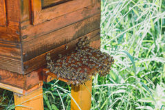 Bees and beehive. Swarm of bees that sit on the hive Stock Image