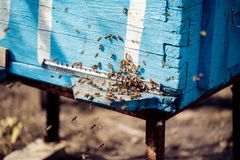 Bees and Beehives royalty free stock image