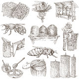 Bees, beekeeping and honey - hand drawn illustrations Stock Photo