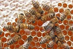 Bees behind work Stock Photos