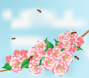 Bees and branch. Bees fly to the flowering branch on a background blue sky with clouds Royalty Free Stock Photos