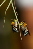 Bees on a branch. Royalty Free Stock Image