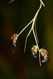 Bees on a branch. Stock Photo