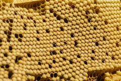 Bees brood comb stock images