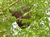 The bees building beehive on tree stock images