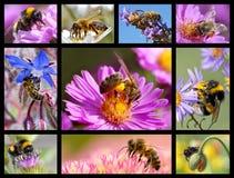 Bees and bumblebees mosaic Stock Photos