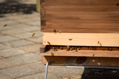 Bees buzzing outside wood box hive Stock Photography