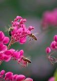 Bees on climbing plant Stock Photo