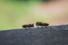 Bees Stock Photo