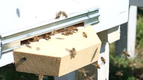 The bees collect flower pollen and put it in a beehive of spring season. Apitherapy. Beekeeping products. The bees collect flower pollen and put it in a beehive stock video footage