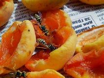 Wasps collect nectar Stock Photos
