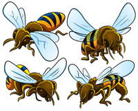Bees Collection Royalty Free Stock Photos