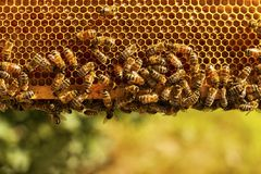 bees concept honeycomb team work working 免版税图库摄影
