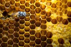 bees concept honeycomb team work working 库存照片
