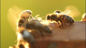 Bees cool your home. stock video footage