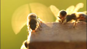 Bees cool your home stock video